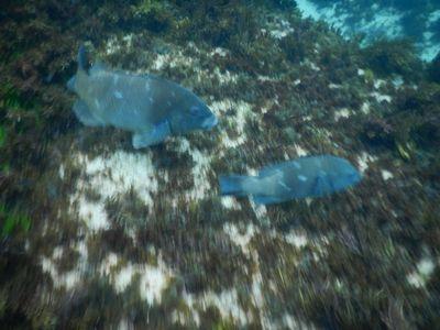 2 fish close up