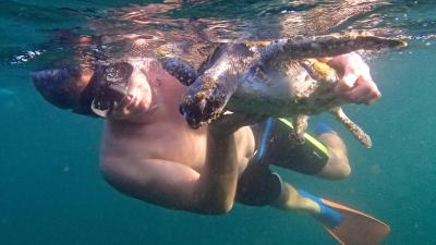 Mauricio - Turtle