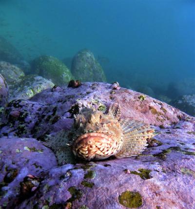Rock cod (2)