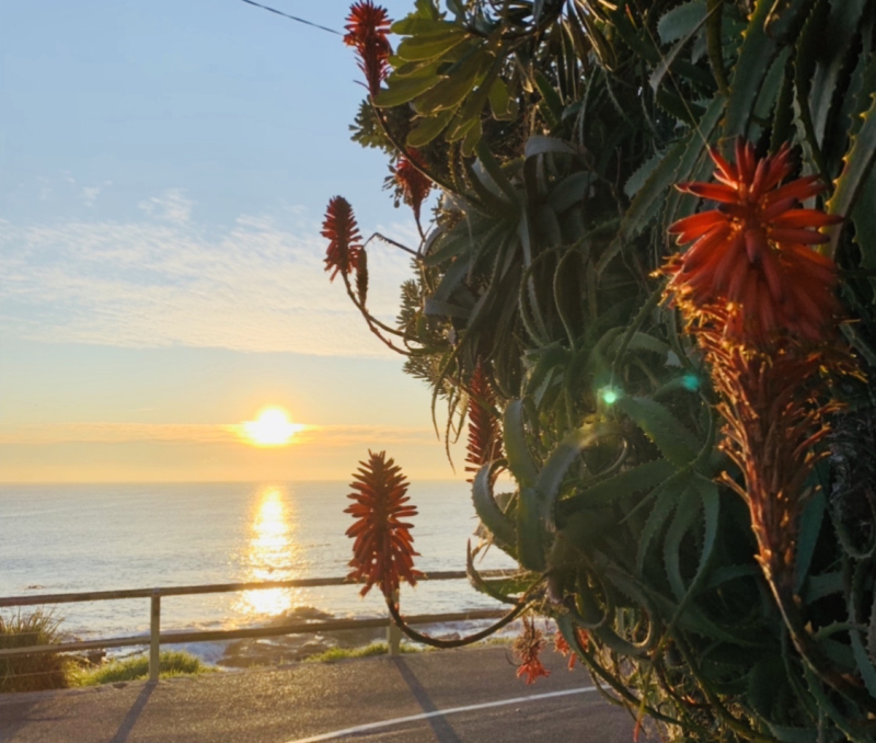 Red flowers and sunrise
