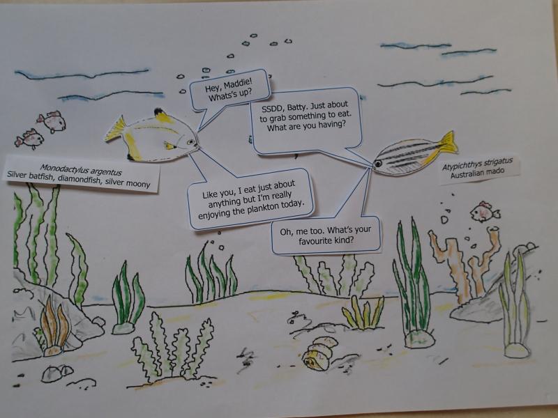 Blog 6 - Plankton 1-2020.07.30