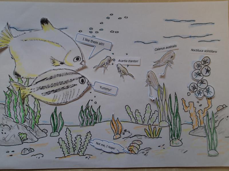 Blog 6 - Plankton 2-2020.07.30