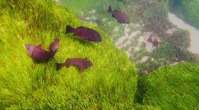 Fish in the grass