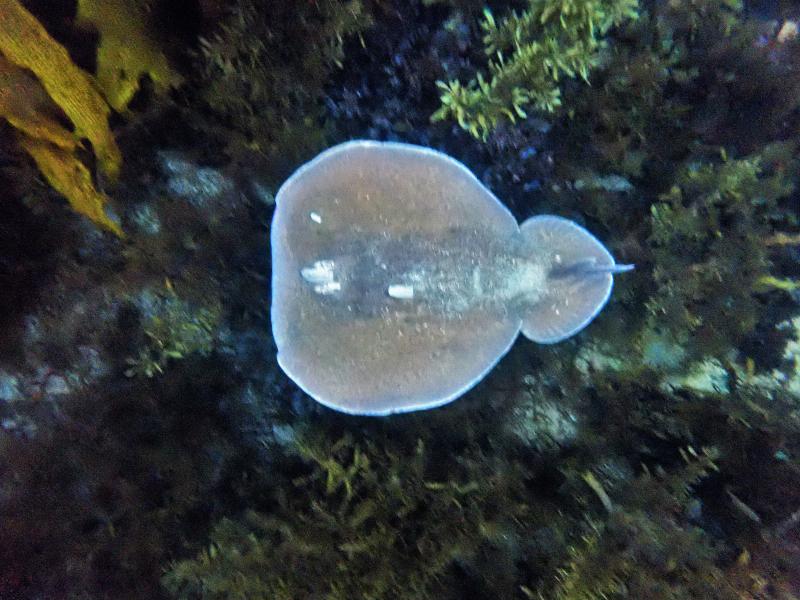 Numb Fish