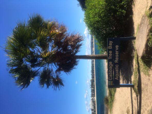 Cabbage Tree Bay resize